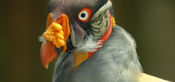 nadšenci s veľkými vtáky