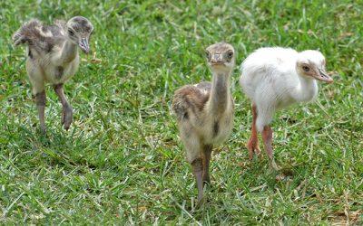 Národná zoologická záhrada Bojnice chová aj zvieratá so vzácnymi poruchami sfarbenia.