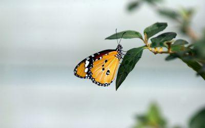 Národná zoo Bojnice už po ôsmy krát otvára brány motýlej záhrady!
