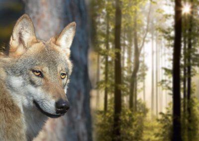 Nové didaktické tabule o vlkoch