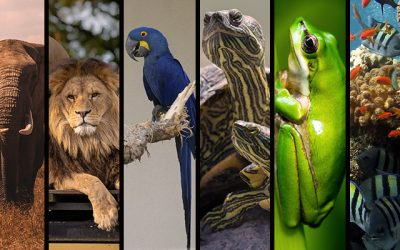 Národná zoo Bojnice a CITES