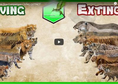 SÚŤAŽ – mačkovité šelmy v NZOO Bojnice