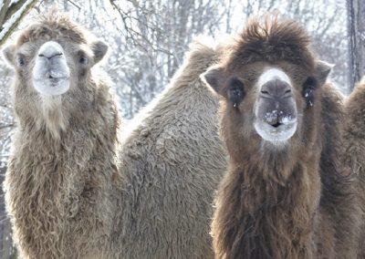 Zima v zoo a vo voľnej prírode