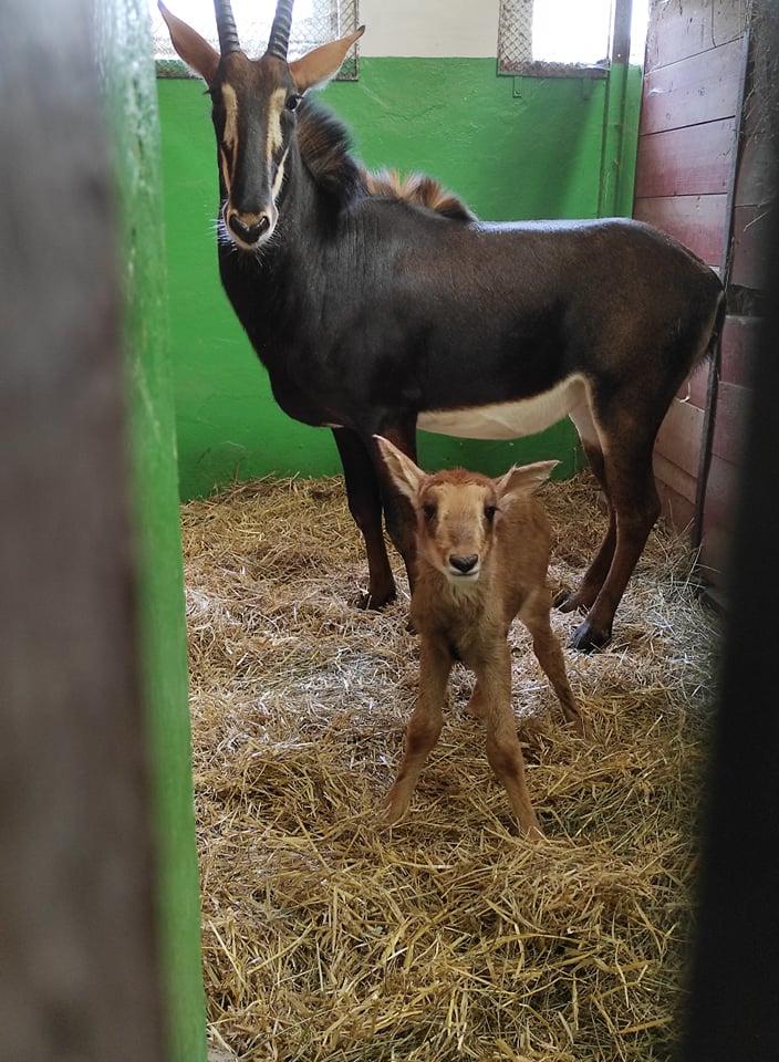 malý Eze so svojou mamou Fionou