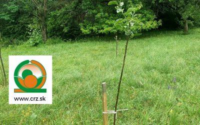 Spoločnosť pod názvom Centrum rozvoja záhradníctva Prievidza (CRZ) prispela k obnove sadu